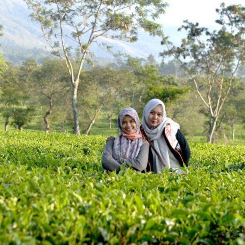 Kebun teh keluarga